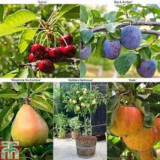 Ordering Bareroot Trees What To Expect  Tall Clover FarmMedley Fruit Tree