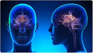 Rezultat iskanja slik za limbic system