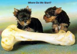 Cute Dog Quotes 30 Amazing Funny Dog Pictures With Quotes Funny Dog Picture Puppy Dog