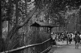 京都 嵐山 竹林 By Yasnoto Id7836466 写真共有サイトphotohito