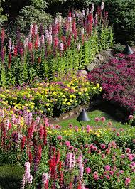 cindy dyer photo of garden rows of flowers