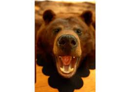 cinnamon black bear rug