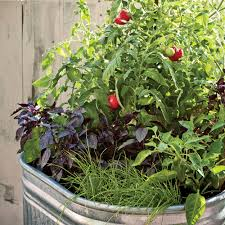 Kitchen Garden In Pots Small Veggie Garden Ideas Sunset