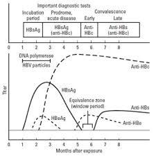 Hep B Serology Chart Rahuls Noteblog Hepatitis Serologic Markers