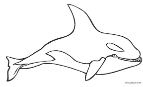 Small Picture Trendy Whale Color Page Killer Whale Coloring Pages