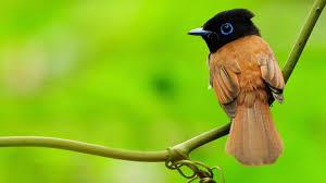 Cute Bird Wallpapers - Top Free Cute ...
