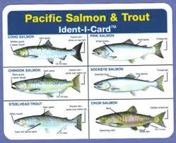 Pacific Salmon Trout Ident I Card Waterproof Freshwater Fish Identification Card