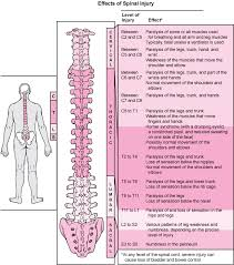 Spine Levels Chart Overview Of Spinal Cord Disorders Brain Spinal Cord And