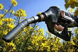 what are biofuels bioethanol biodiesel schoolworkhelper biofuel satildecopyrie thatildecopymatique la stratatildecopygie de lisbonne