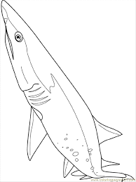 Small Picture Whale Shark Coloring Page Coloring Home