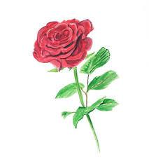 single red rose flower blossom vinyl