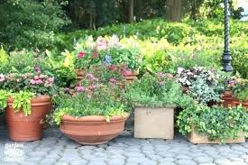 container gardening for beginners. Container Vegetable Gardening For Dummies Beginners Large Size . M