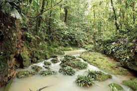 amazon rainforest. Simple Rainforest A Stream In The Amazon Rainforest Ecuador In Rainforest M