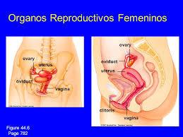 She masturbate eunuch ovary vagina