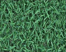 tall grass texture seamless. Unique Tall SeamlessGrass08grasstexture To Tall Grass Texture Seamless P
