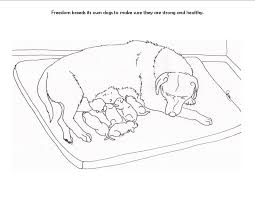 Small Picture Labrador Retriever Coloring Page Free Printable Coloring Pages For