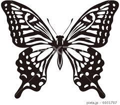 チョウ標本のイラスト素材 Pixta