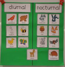 diurnal animals list for kids. Unique List Hereu0027s A Set Of Pictures For Sorting Nocturnal And Diurnal Animals Post  Includes Examples Student Journal Entries To Diurnal Animals List For Kids O