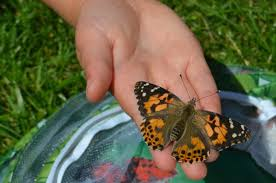 Image result for insectlore butterflies