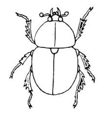 Small Picture beetle coloring pages insects coloring pages Kokeile nit