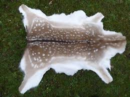 nice new real spotted fallow deer skin hide rug taxidermy a grade