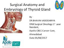 Thyroid Anatomy Clinical Anatomy Of Thyroid Gland