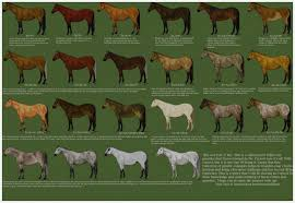 Foal Color Chart 43 Bright Aqha Horse Color Chart