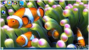 free clownfish aquarium live