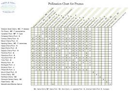 Fruit Tree Pollination Chart Biodiverseed Edible Forest Gardening 101 Pollination One