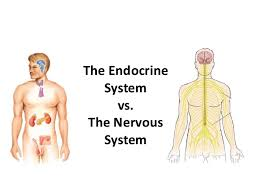 Comparative Functions Of Nervous And Endocrine Systems Chart Endocrine System Endocrine V Nervous System
