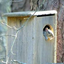 squirrel proof bird house plans gray build feeder pro