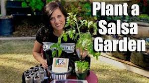 how to plant a salsa garden starting
