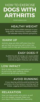 how to exercise a dog with arthritis