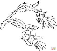 Schlumbergera Bloom Super Coloring