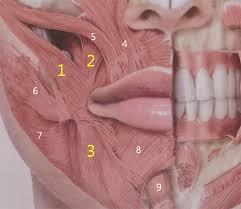 smile lipt mouth corner lift