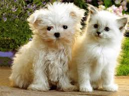 cute kittens and puppies together wallpaper. Modren Cute Kitten And Puppy And Cute Kittens Puppies Together Wallpaper
