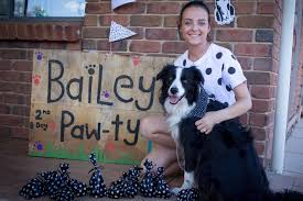 Birthday cakes for dogs adelaide ~ Birthday cakes for dogs adelaide ~ Dog owners embrace elaborate birthday party trend for beloved