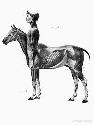 9 Centaur Drawing Half Man Half Horse For Free Download On Ayoqqorg