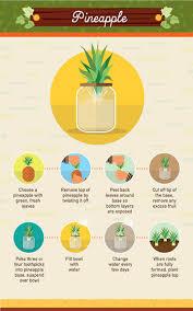 Kitchen Scrap Gardening Infographic 19 Foods You Can Regrow From Scraps