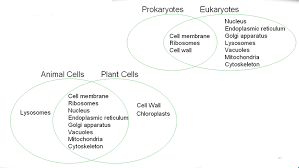 science method chemistry cell structure d differences between plant and animal cells