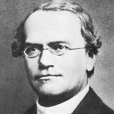 essay on ldquo gregor mendel rdquo the father of genetics mendel
