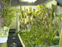 basement grow room design. Design Cannabis Lighting Sealed Home Grow Room Perfect Basement To Do A Main