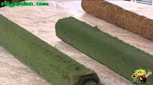 Fixing indoor climbing plants to a foam or moss support - YouTube