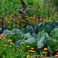 Crop Rotation Chart Vegetable Gardening Vegetable Garden Crop Rotation Must Have Handy Garden Guide