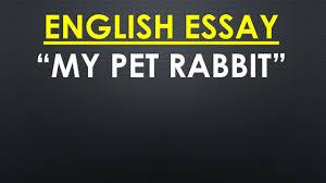 english essay my pet rabbit english essay my pet rabbit