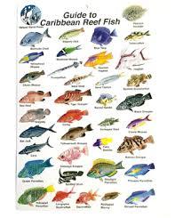 Fish Caribbean Of - Scuba House Card Slate Id Reef