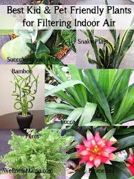 Best kid and pet friendly houseplants for filtering indoor air How to  Improve Indoor Air Quality