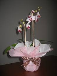 trieu love orchids gift wrapped