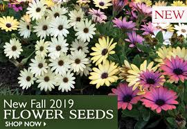 new 2019 fall flower seeds now