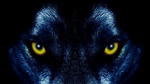 Eyes Of A Wolf 4k Ultra Hd Wallpaper Hintergrund